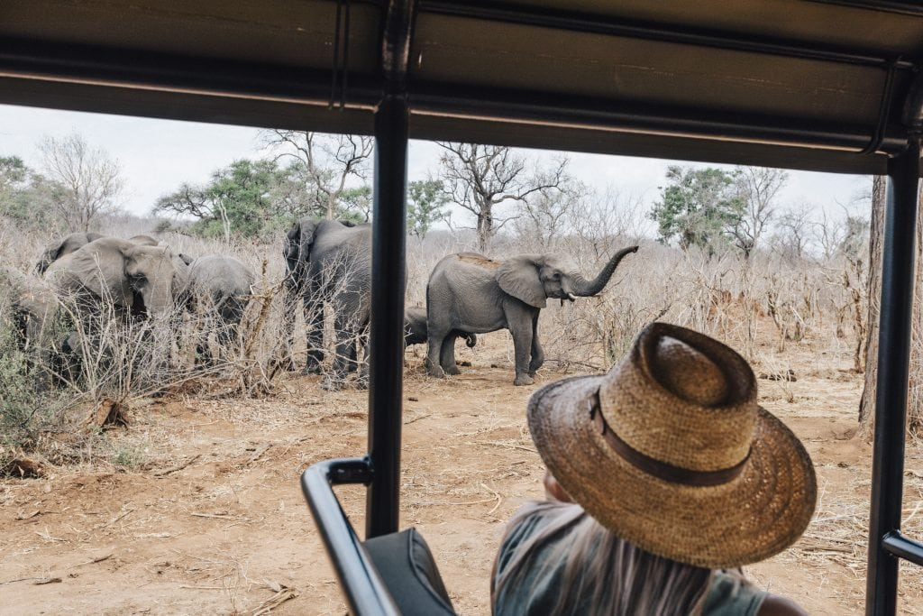 A guest spotting elephants on a game drive at Matetsi Victoria Falls