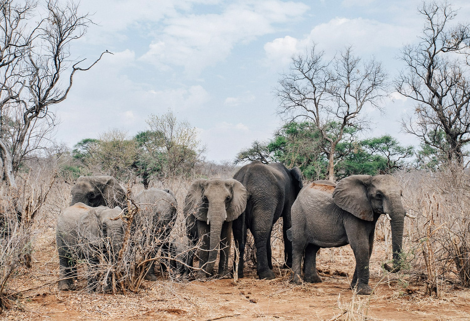 matetsi-staging-image-elephants.jpg